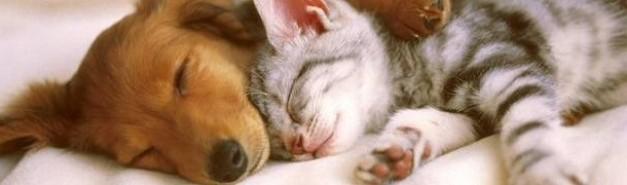 Чистка ковров в доме, где живут домашние животные